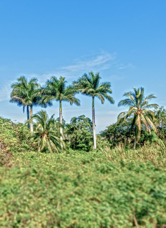 De Zapata Yarımadası