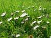 Boyalı, kır çiçekleri